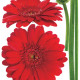 punainen gerbera seinätarra 4